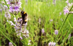 Buzz Off by iia02dennisg