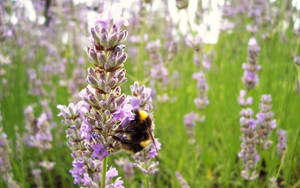 Bee Picture by iia02dennisg