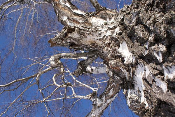 old tree by gEoRgE-yOo
