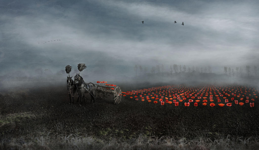 Poppies by Notvitruvian