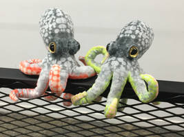Lime and Cherry Octoids