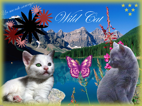 La galerie de l'Évoli sans cervelle... - Page 2 It__s_wilds_cats__by_Eevee33