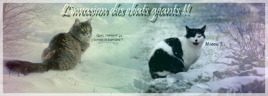 La galerie de l'Évoli sans cervelle... - Page 3 Giants_cats_by_eevee33-d363gc7