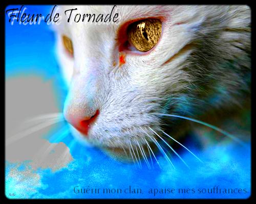 La galerie de l'Évoli sans cervelle... - Page 3 Tornadoflower___signage_by_eevee33-d395vv7