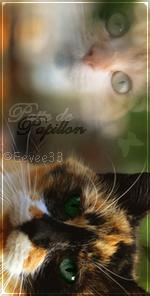La galerie de l'Évoli sans cervelle... - Page 4 Butterflykit___avatar_by_eevee33-d48ml55