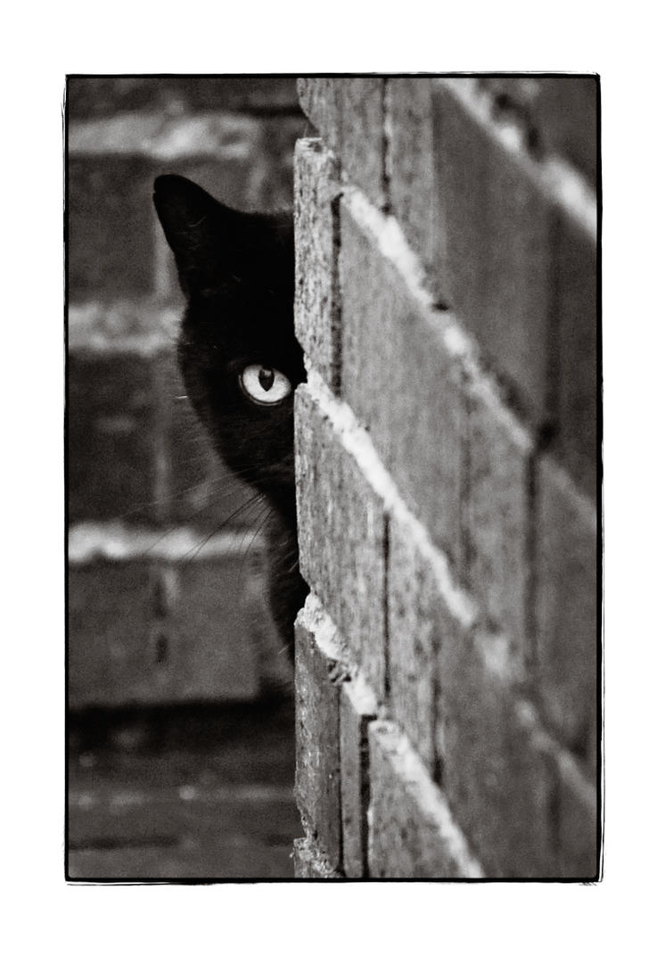 Peek by ninereeds-DA