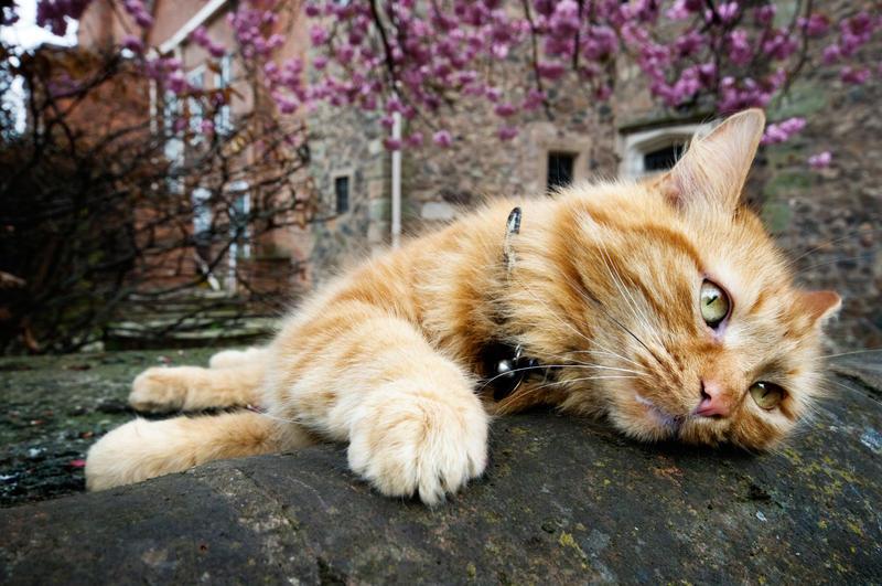 Lazy cat by ninereeds-DA