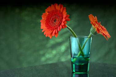 Gerberas and green shot-glass by ninereeds-DA