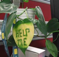 Leaf - Unwrapped