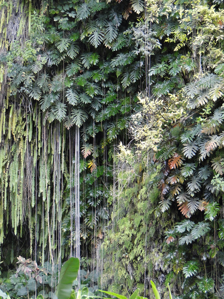 1000+ images about jungle on Pinterest | Rainforest trees ...