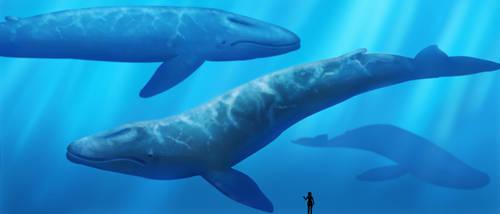 Whale Tank by lawlietlk