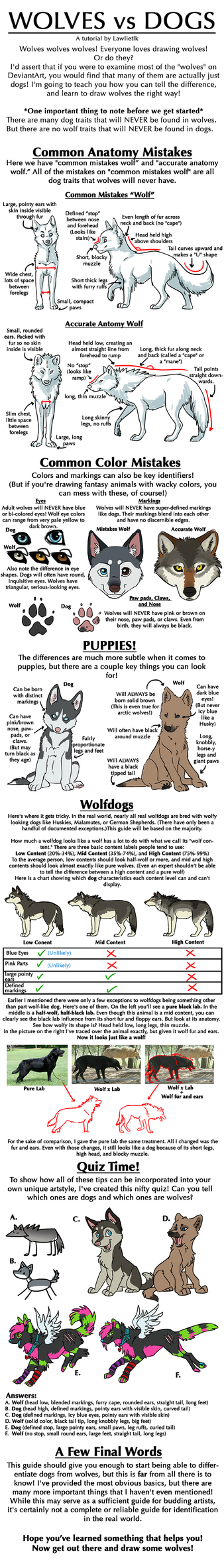 Wolves vs dogs tutorial by lawlietlk on deviantart wolves vs dogs tutorial by lawlietlk nvjuhfo Images