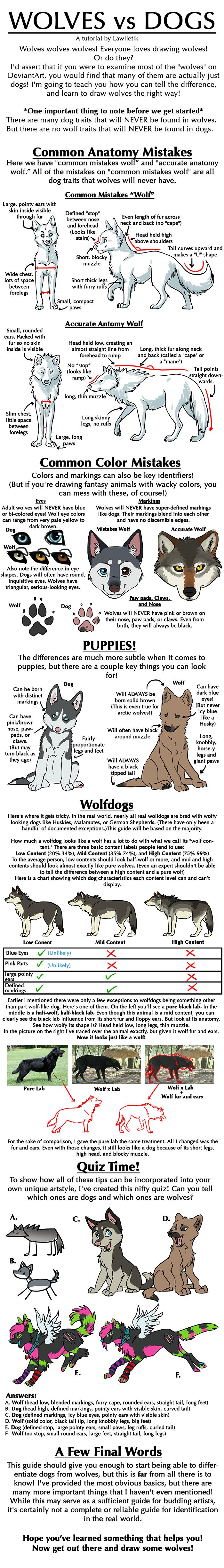 Wolves vs Dogs Tutorial by lawlietlk on DeviantArt