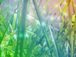 Light at Grass