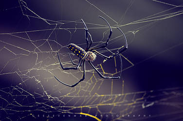 Spider I by csmlitratista