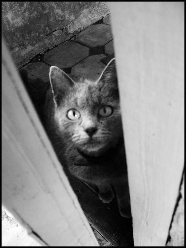 http://fc00.deviantart.com/fs48/i/2009/218/5/1/My_cat_by_StarWay_aka_Gisele.jpg