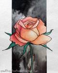 Rose in smoke