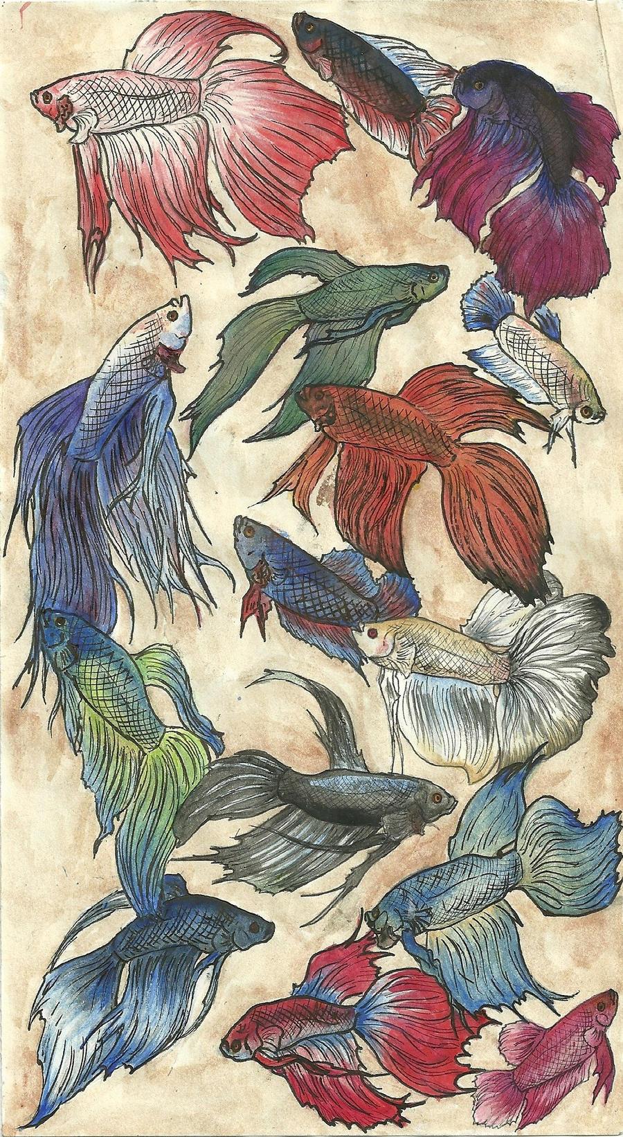 Betta splendens by LabradoriteEyes on DeviantArt  Betta Fish Drawings