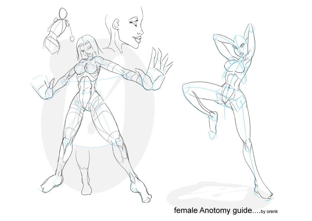 Woman anatomy drawing
