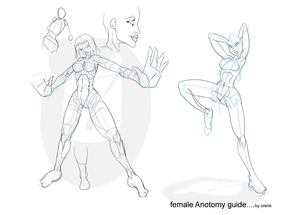 Female Anatomy Artists