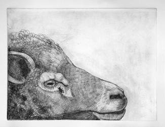 sheep head by helterbraegen