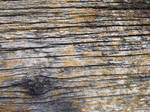 Yellow Mossy Wood Texture