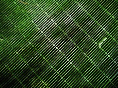 Slimy Green Grid Texture
