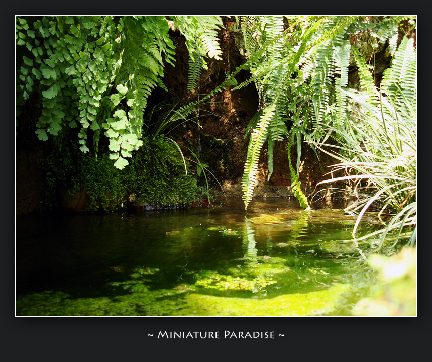 Miniature Paradise by AeonOfTime