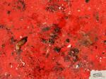 Cechas surfaces-29-1600x1200