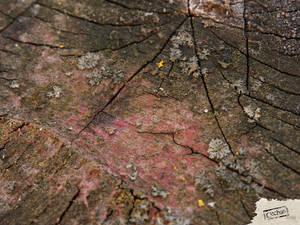 Cechas surfaces-40-1600x1200