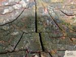 Cechas surfaces-45-1600x1200