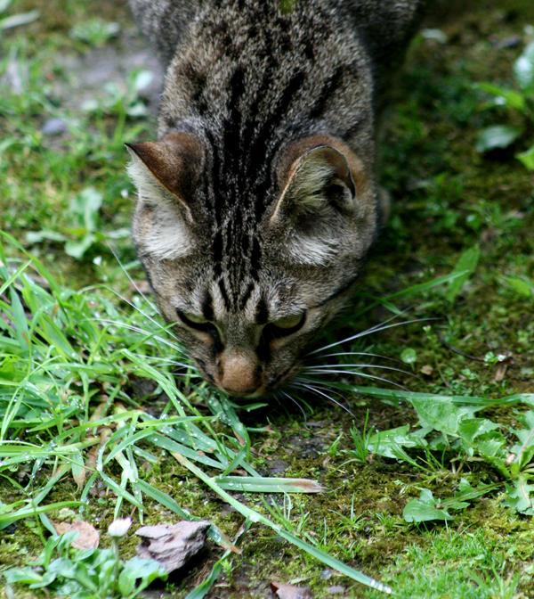Jungle Cat by sadisticwench
