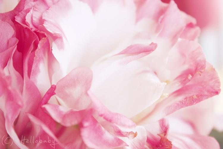 Valentine by HBisnt