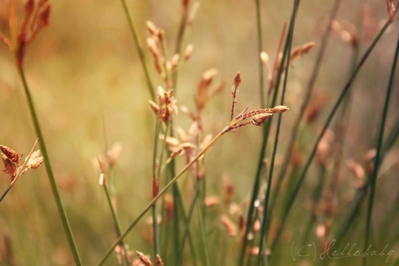 Golden Spring by HBisnt