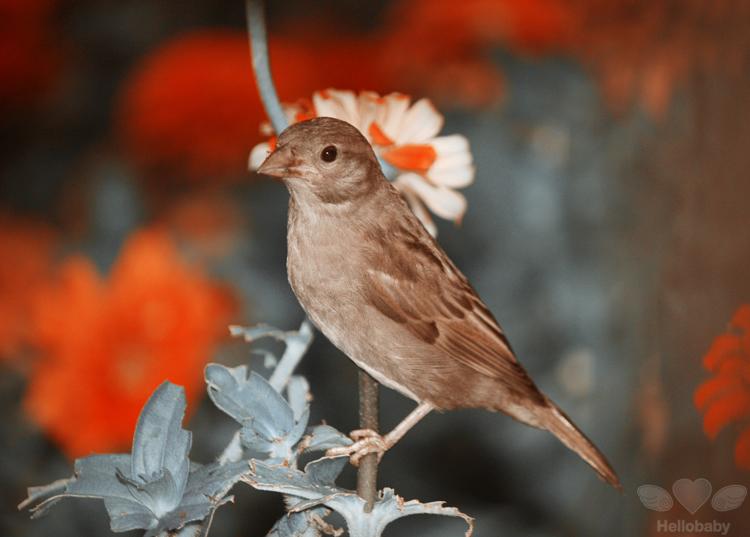 Little bird by HBisnt