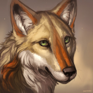 KotaCoyote's Profile Picture