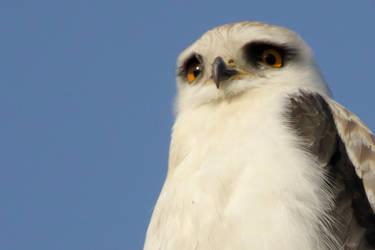 Best bird ever by furstripe