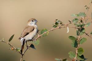 Ripe Bird
