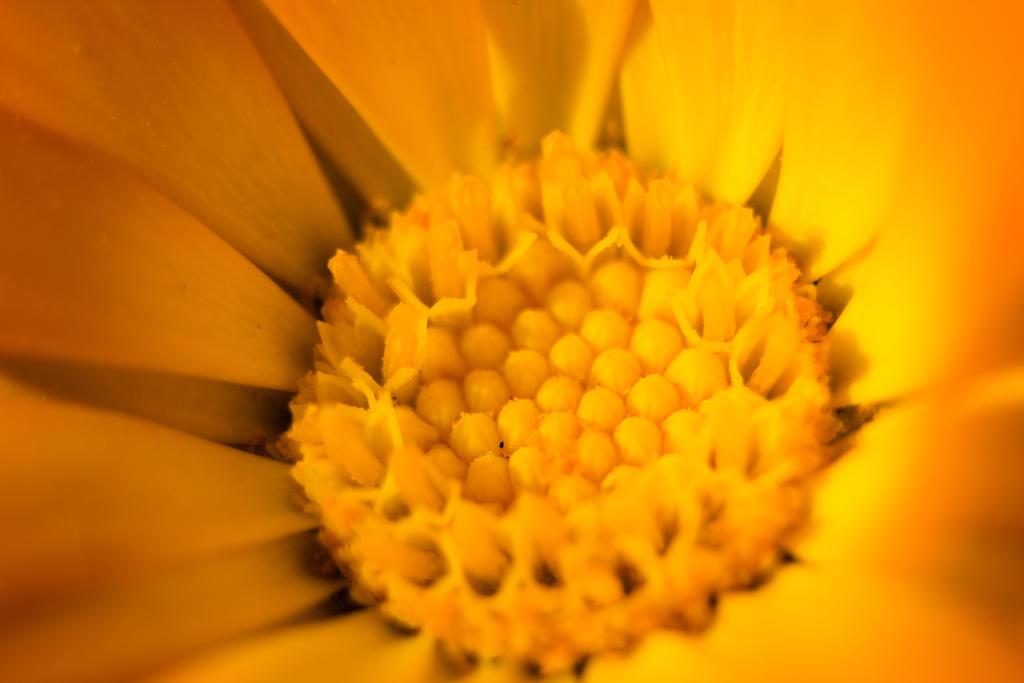 Center of Sun by furstripe