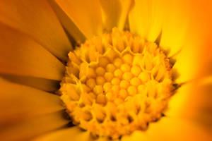 Center of Sun