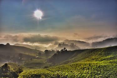 Death in Tea Valley