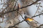 Fractious Bird