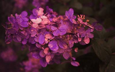 lush by Nimbue