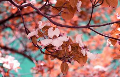 primavera by Nimbue