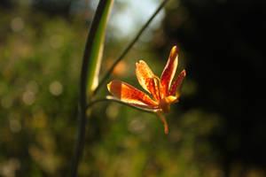 sunstar by Nimbue