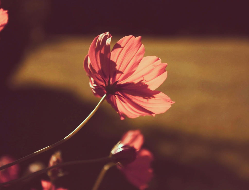 midsummer dream by Nimbue
