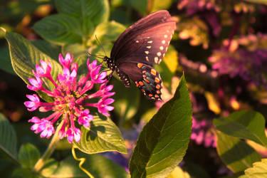 nectareous by Nimbue