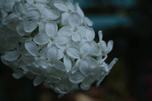 gentle reminders by Nimbue