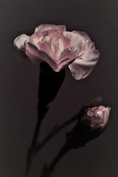 purity by Nimbue