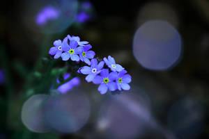 serenity by Nimbue